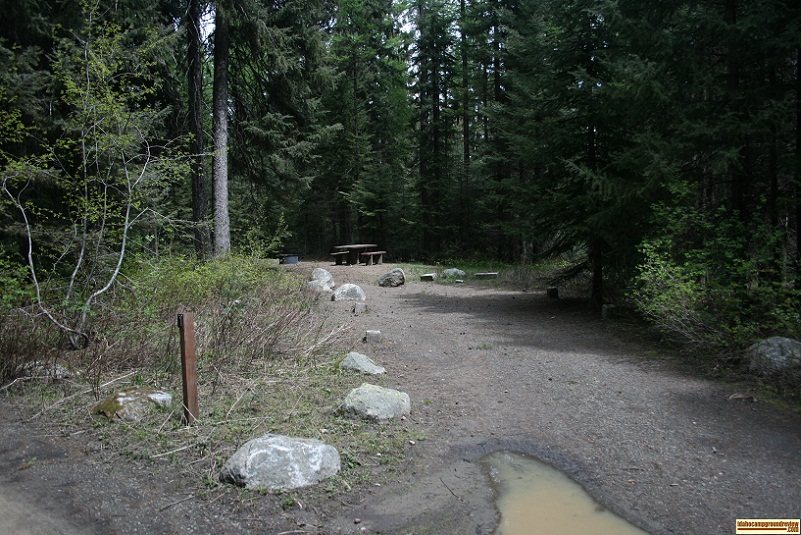 A picture of campsite one in Amanita Campground