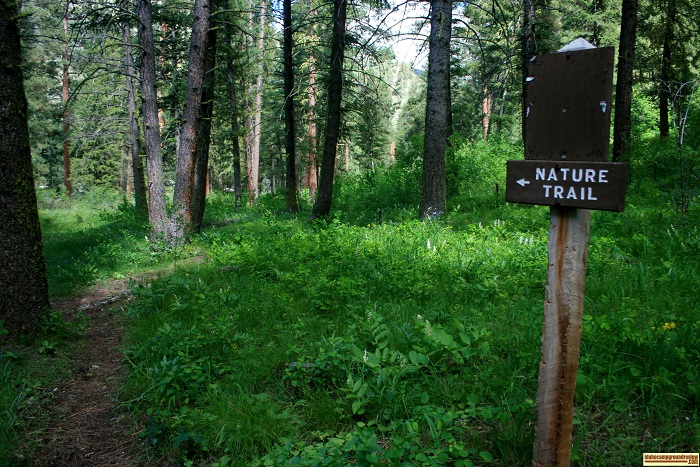 Baumgartner Campground has a nature trail.