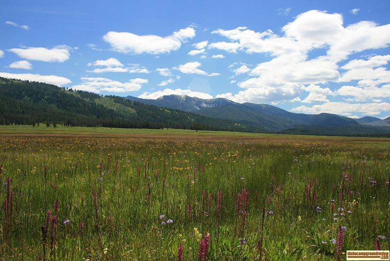This is a view of parts of the meadows in Bear Valley about 4 miles from Bear Valley Campground.