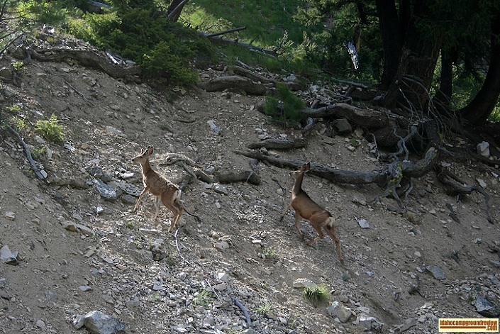 This doe with her young buck were at the hot spring when I came around the corner.