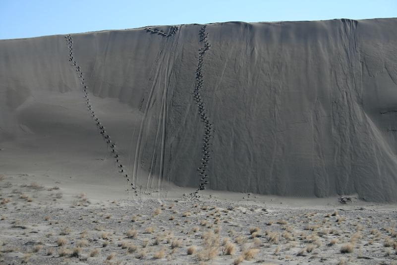 picture of footprints in the sand in bruneau dunes state park near bruneau idaho
