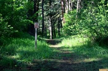 Dog Creek Campground trail, for those who love camping in Idaho.