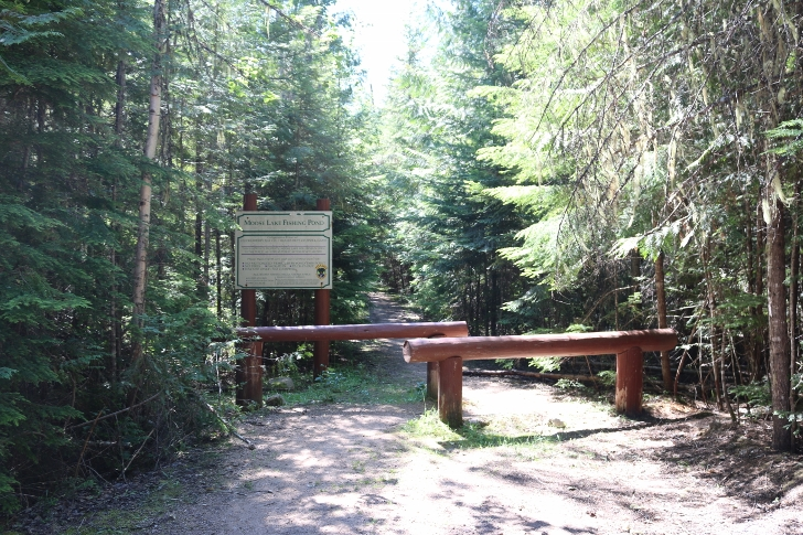 Walk down this path to a T and take the right path to Moose Lake Fishing Pond.