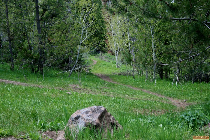 This is one trail leading away from Lower Penstemon Campground.