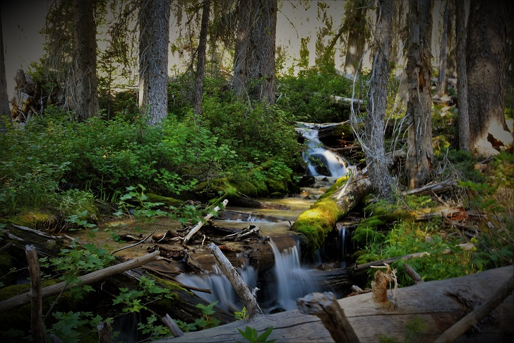 A picture of an unnamed tributary of Stanley Lake Creek.