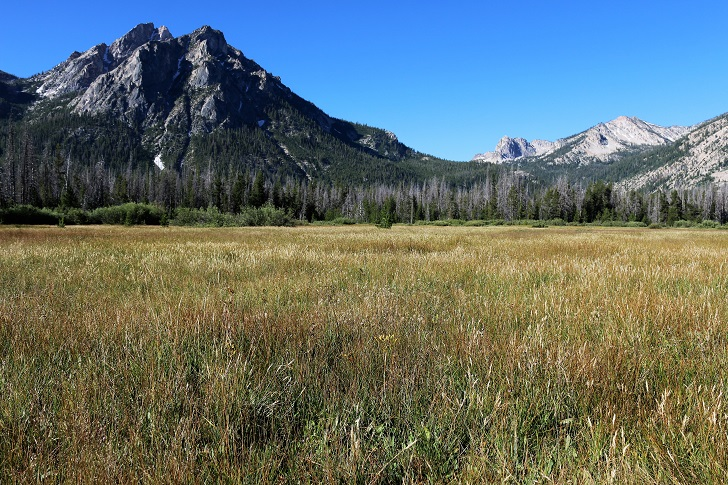 A picture of the meadows along the Idaho Centennial Trail with Mount McGowen in the background.