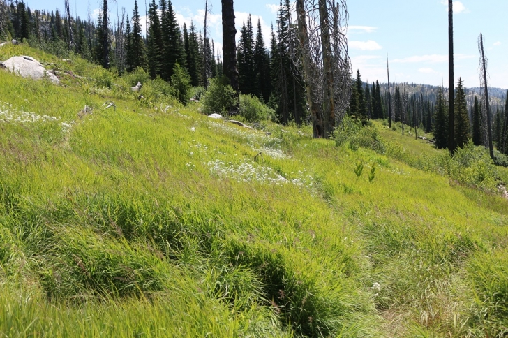 A picture of the trail crossing a very grassy hillside about a half mile into the hike.