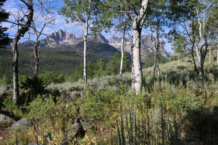 A picture of the Sawtooth Mountains through aspen trees.