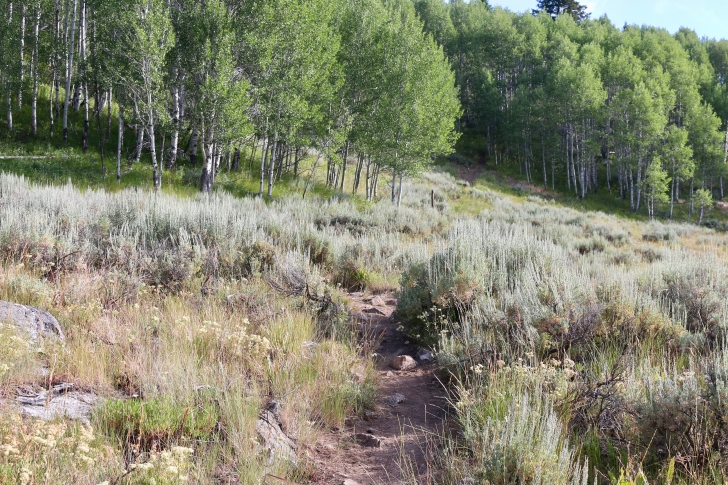A picture of the trail as you climb up the ridge to the Alpine Way trail.