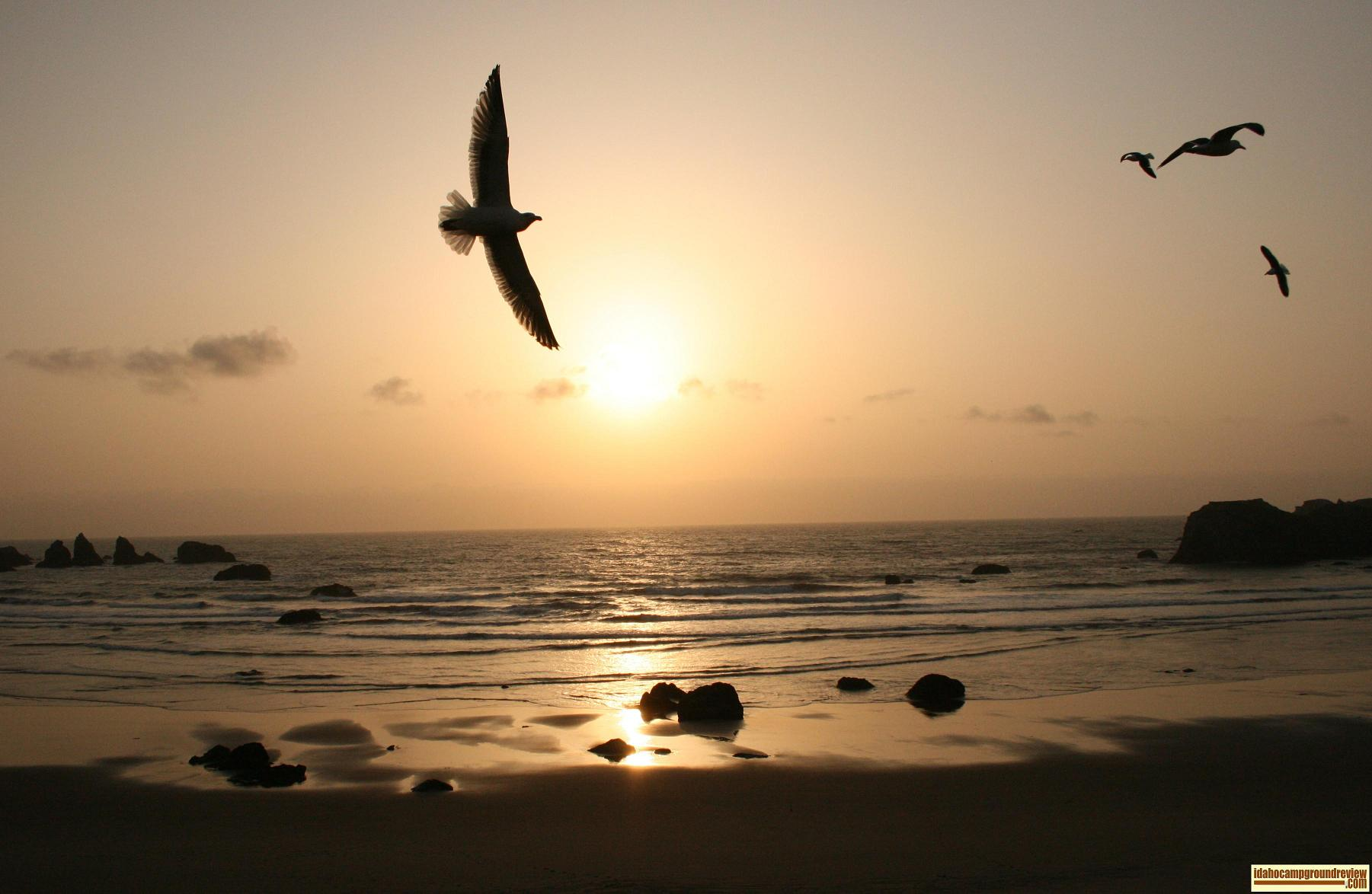 Picture of sunset with seagulls soaring in the sun at the beach in Bandon, Oregon.