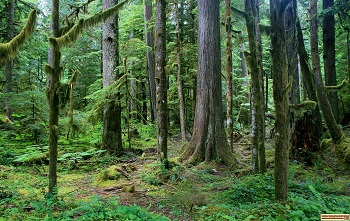 Rainforest on Mt Rainier Washington