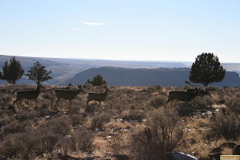 Mule deer with Owyhee Canyons in the background